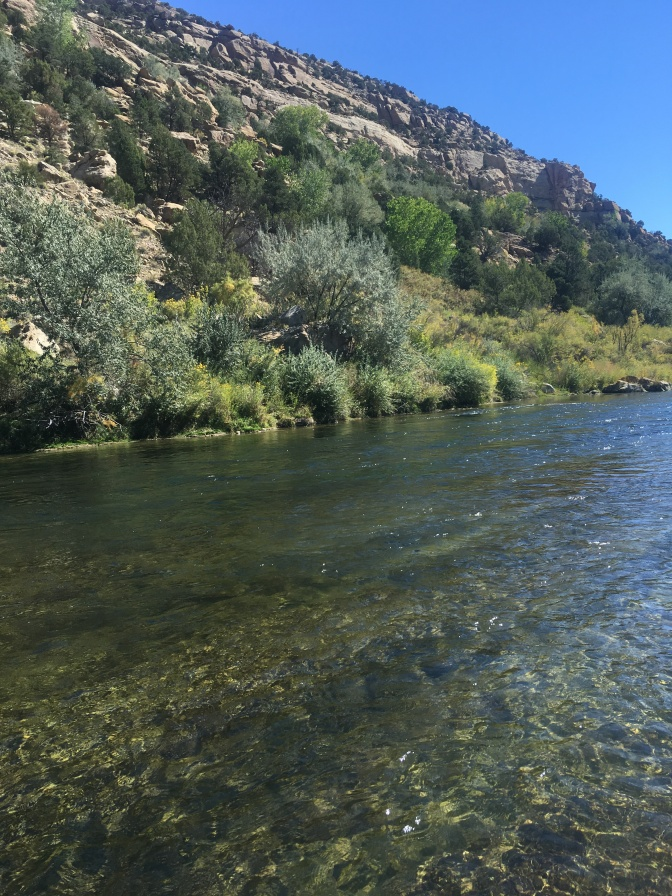 How to Fly Fish the San Juan and be Successful