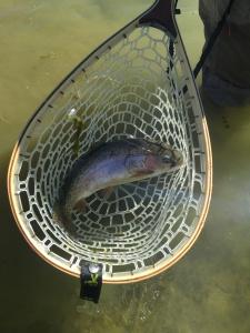 Munoz Fish in the Net